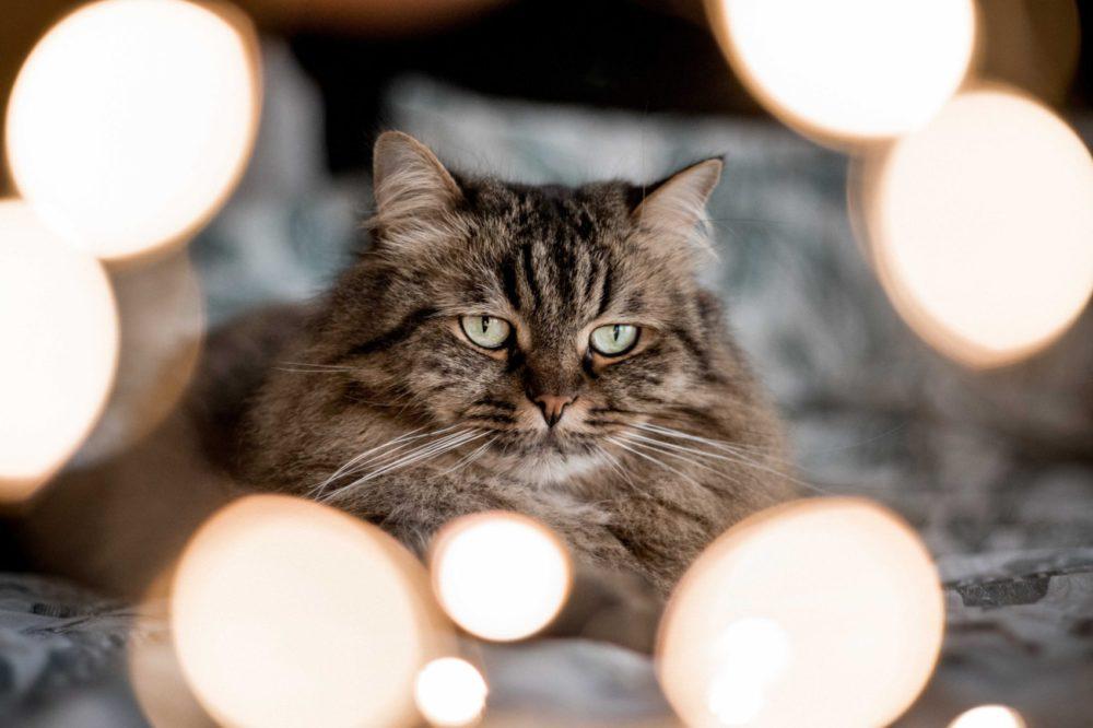 Cat Sitting in Dubai