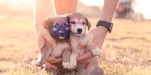 Two cute puppies posing for a photo