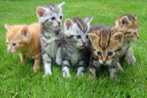 How to Take Care of a Newborn Kitten?