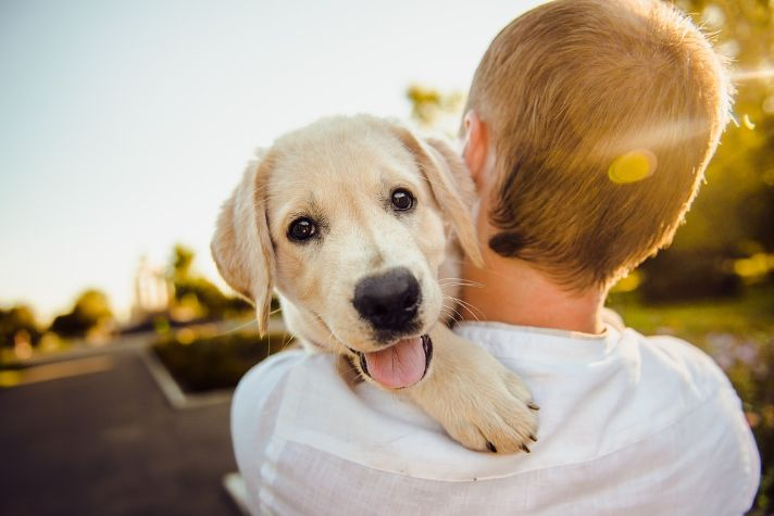 Reasons to Adopt a Pet Instead of Buying