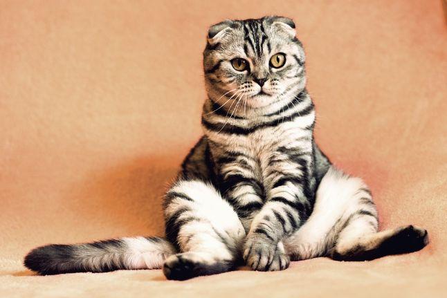 A cat sitting down