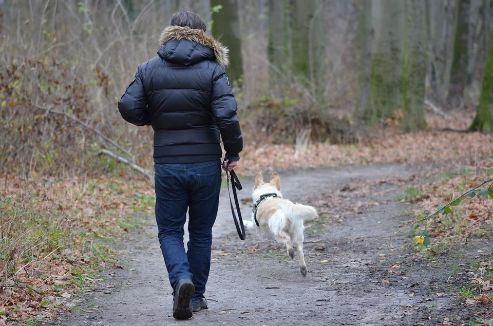 Dog walking to stay fit