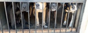 Inhumane conditions of dogs inside a puppy mill