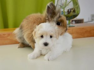 A puppy and a bunny cuddling