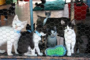 Kitten, Kennel, Kitty, Feline, Cute, Hair