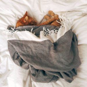A cat's bedding with blankets