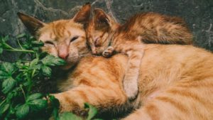 Mommy cat and her baby cuddling together