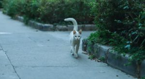 Cat swaying its tail from side to side