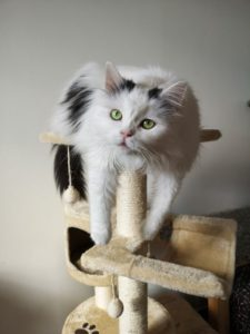 A cat on a scratch post
