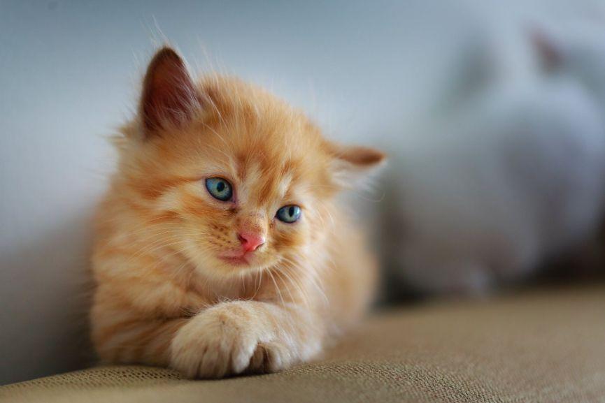 A kitten crawling