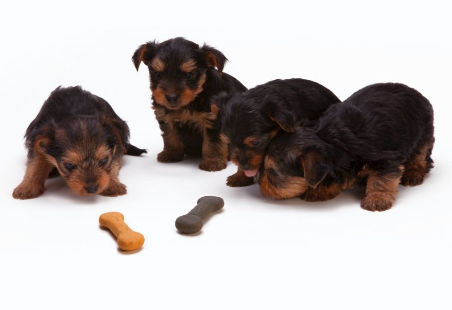 Puppies with a treat