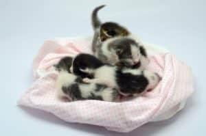 One week old kittens