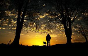 A pet wonder and his dog walking in the woords