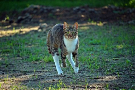 A cat running in the yard