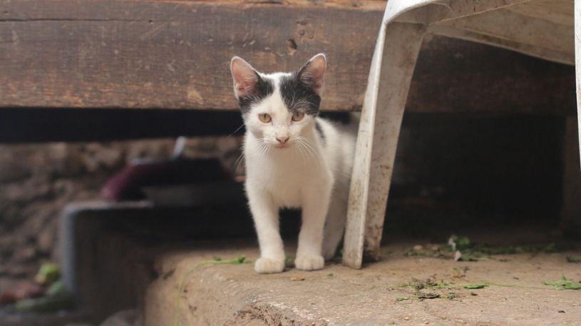 A cat under a platform