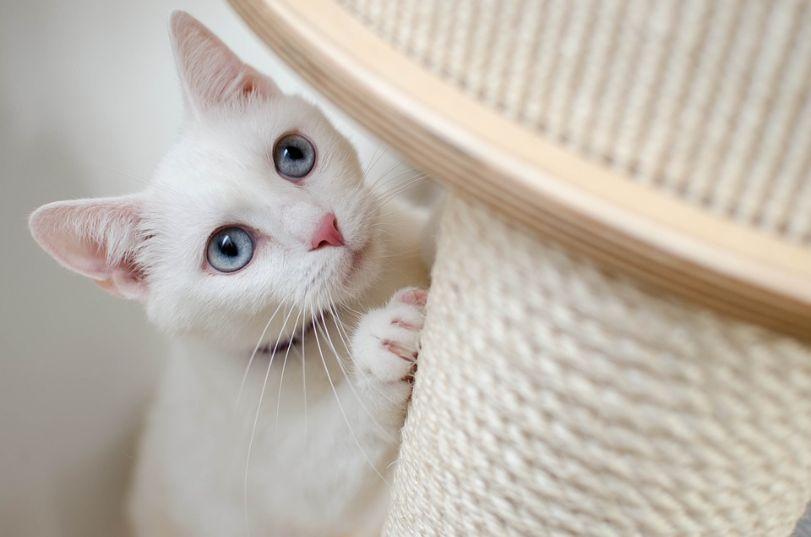 A cat using a scratch post