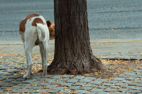 A dog sniffing a tree