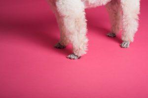 Furry dog legs