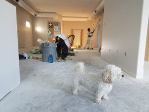 Dog with his pet owner cleaning in the background