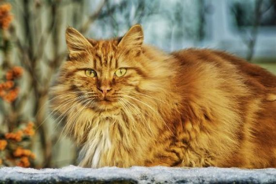 Are There Any Hypoallergenic Cat Breeds?