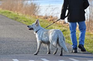 A dog on a leash lunging