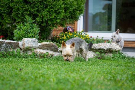 Dog at the yard