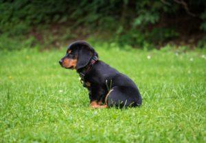 A dog sitting on grass