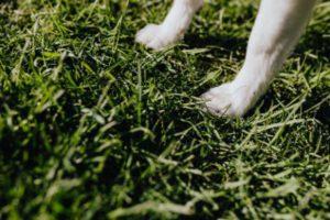 A dog standing on a grass