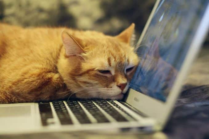 A bored cat