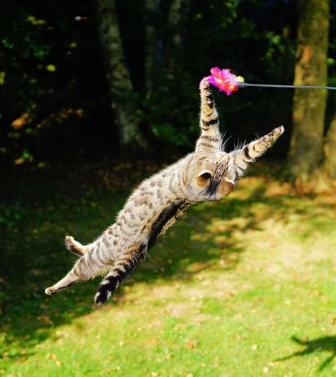 A cat playing with a feather toy