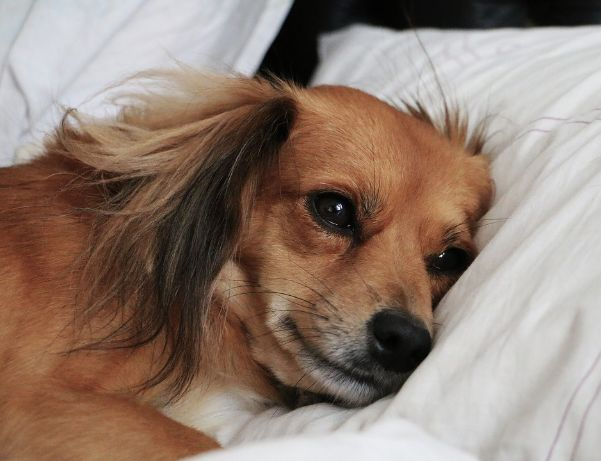 A dog on a bed