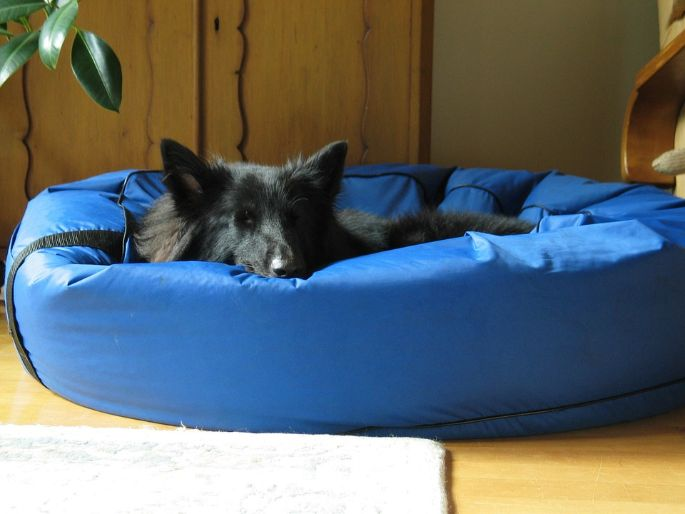 A dog on a sturdy bed