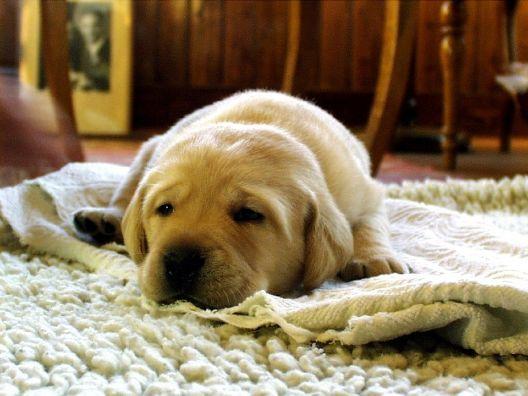 A dog sleeping on a carpet
