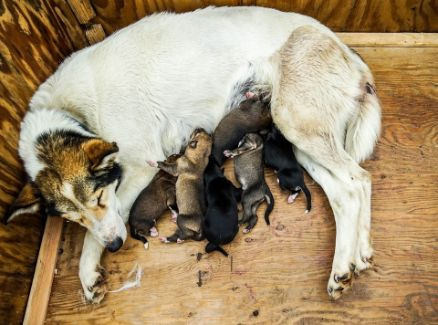 A dog with her litter