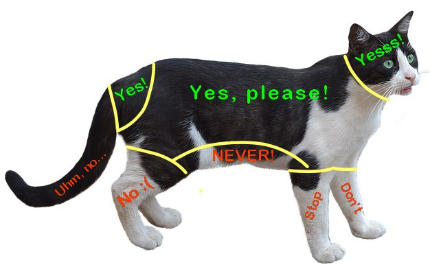 Where to and not to pet a cat