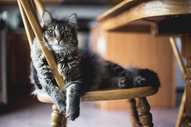 Cat on a wooden chair