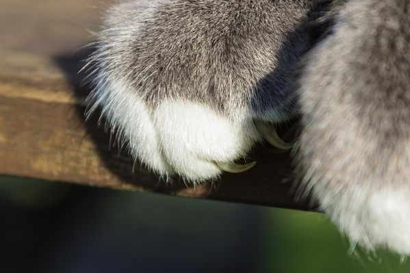 Cat paws and claws