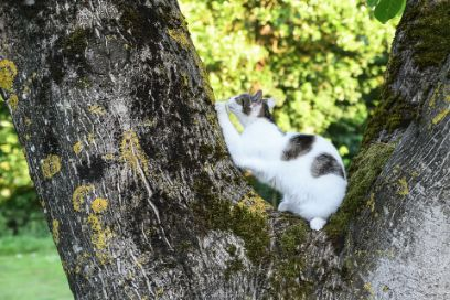 Cat scratching a tree