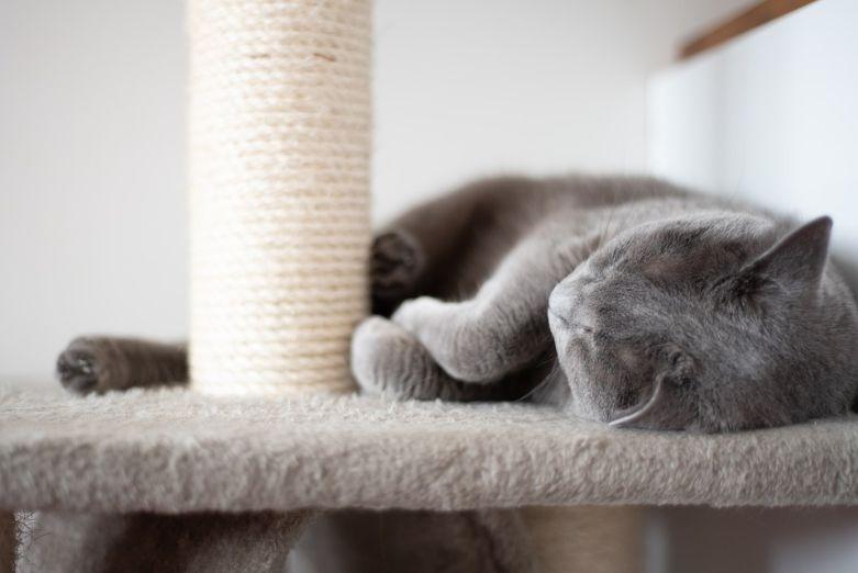 Cat sleeping on a condo