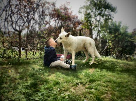 Dog licking a kid