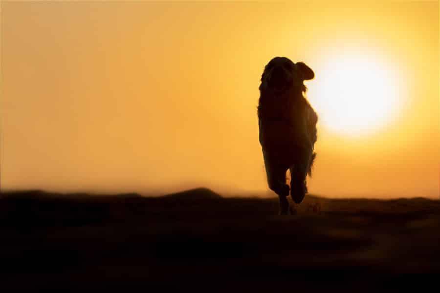 dog photographer in dubai