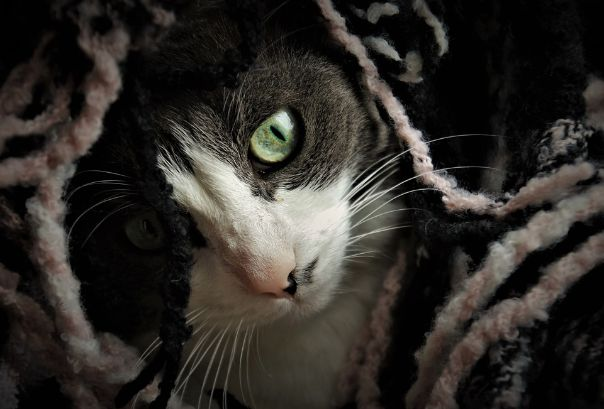 A cat hiding