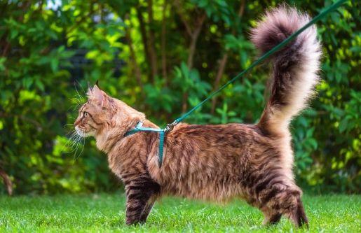 Cat in a yard