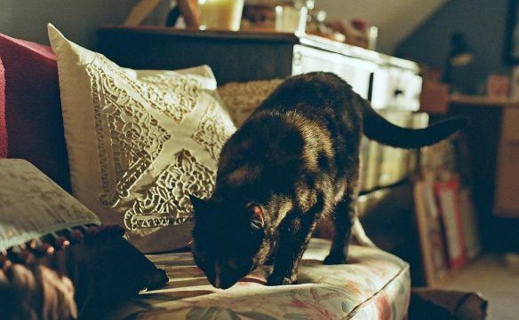Cat walking indoors