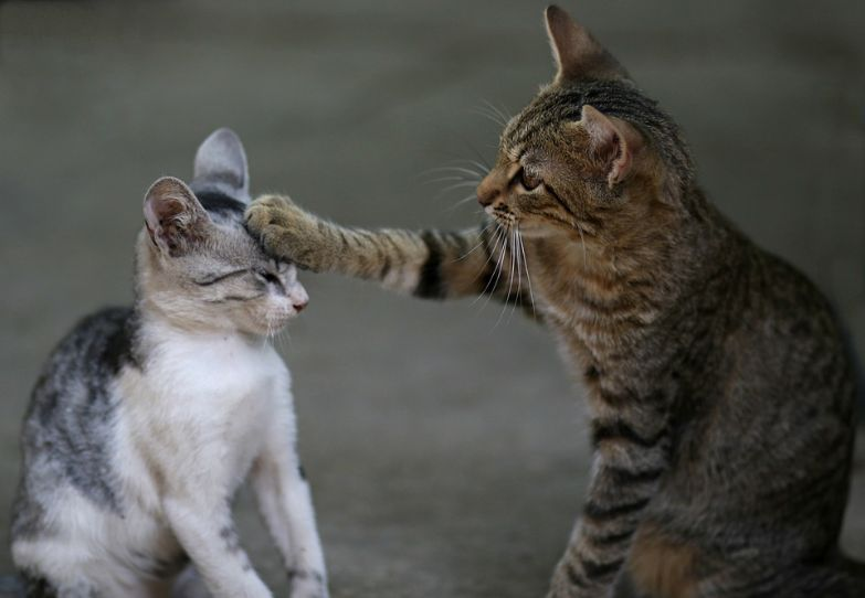 Cats socializing