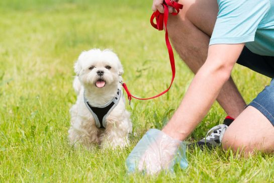 Pet parent picking up dog poop