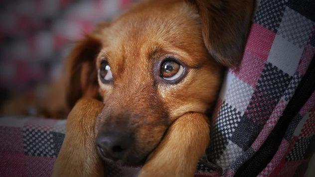 ashamed dog