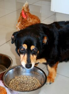 Dog's Food