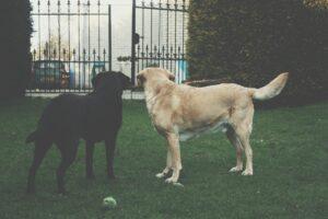 Dog's Playing