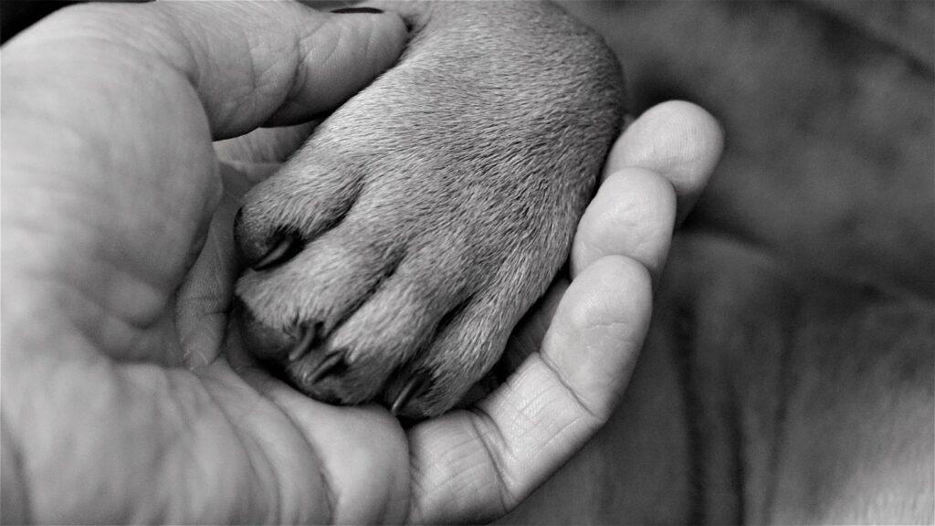 Examining Dog's paw